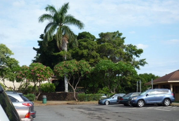 20081013_university_of_hawaii_p1050